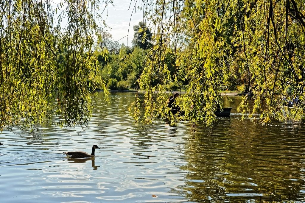 Bernache sur le Lac