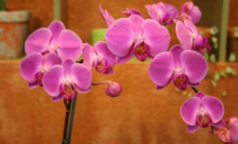 Beispiel: Blumendeko, Foto: Der Blumenladen.