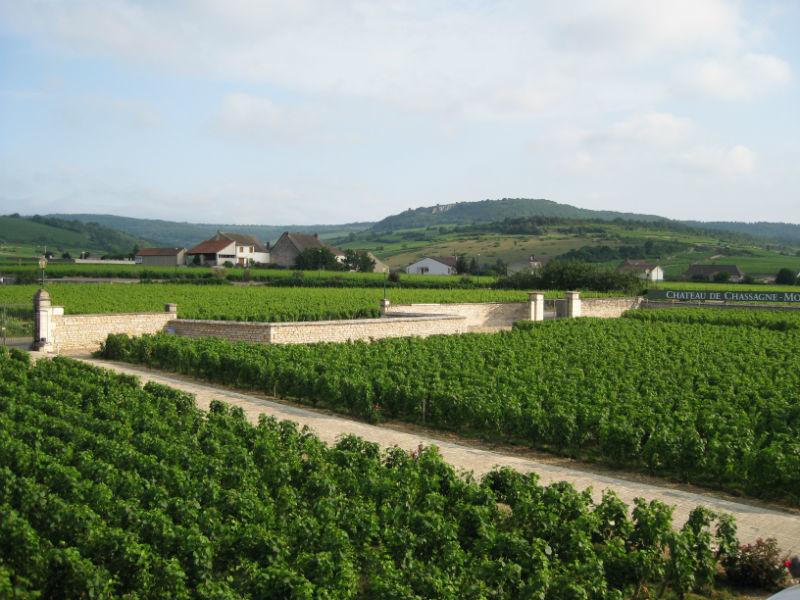 Une mer de vignes vue du Château de Chassagne-Montrachet