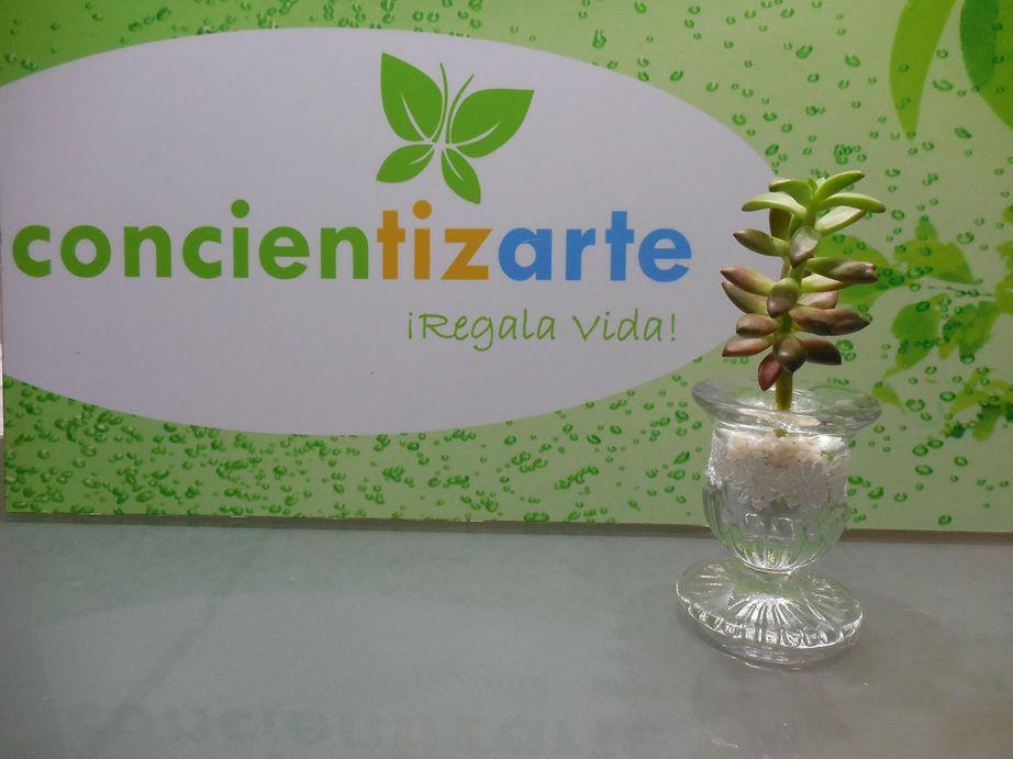 Planta Suculenta en maceta de vidrio decorada con blonda y piedras decorativas. Recuerdo de boda, shower.