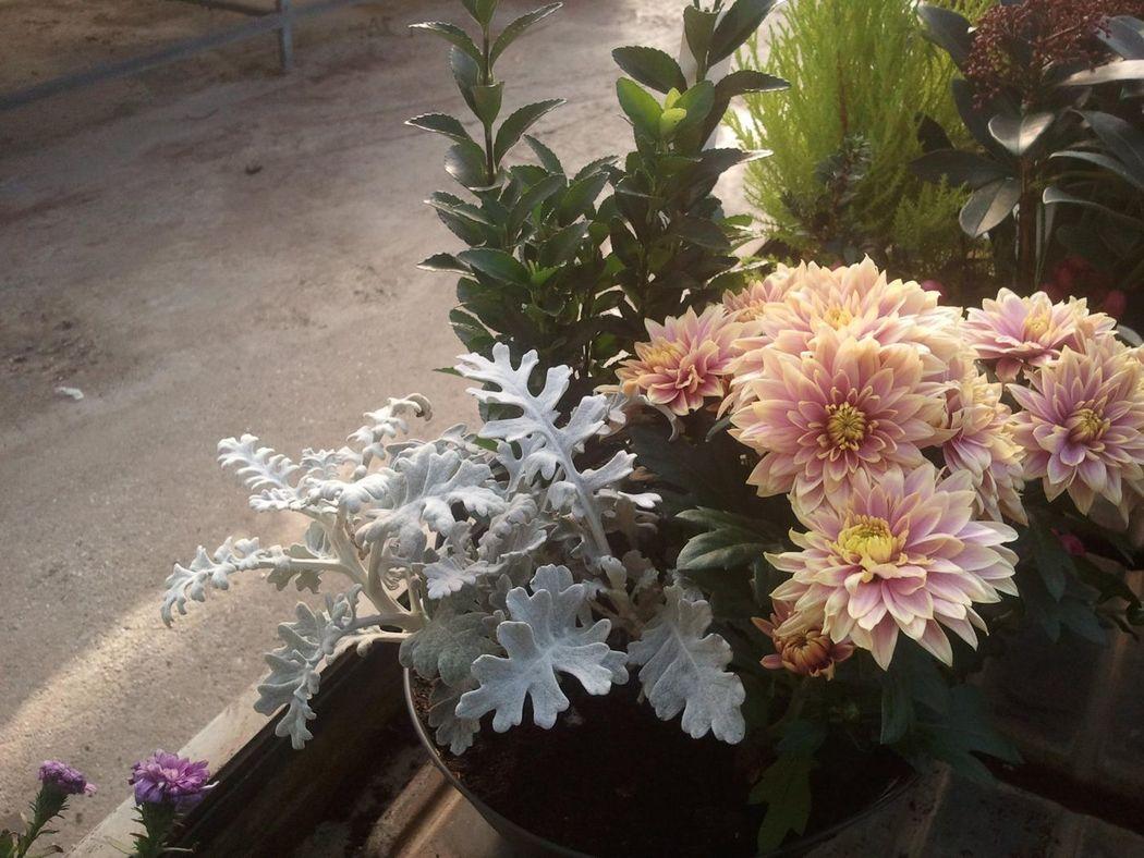 Garden Valcavasia