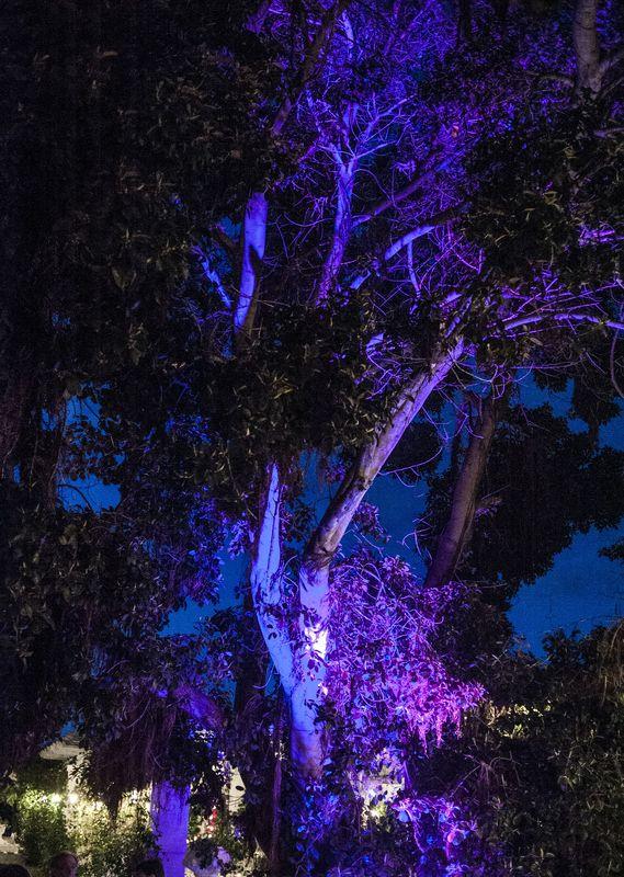 Iluminación Especial de Árboles Centenarios