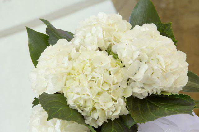 Ausonia Wedding