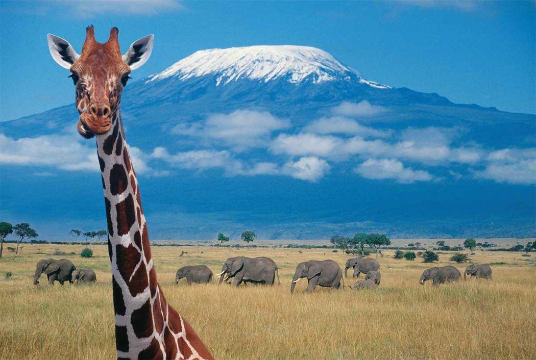 Kenia & Zanzibar 08 noches. Precio por persona desde 1850€. Solicita más informacion