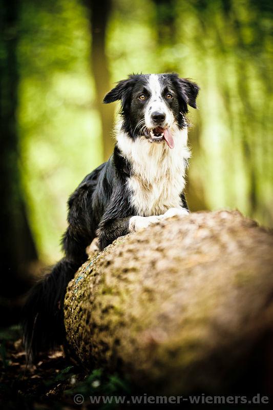 Tier Fotos, Hundefotograf, Berlin, Tierfotograf: WIEMER WIEMERS Fotografie