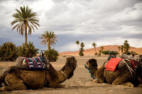 Noches de magia en el Desierto de Merzouga vive una luna de miel de las 1001 noches.
