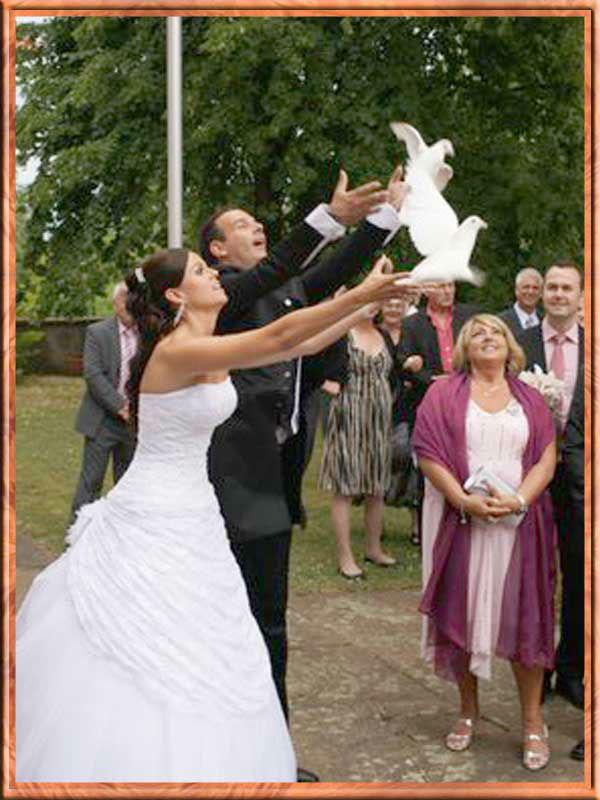 Beispiel: Handtauben, Foto: Hochzeitstauben - Service – Bergstrasse.