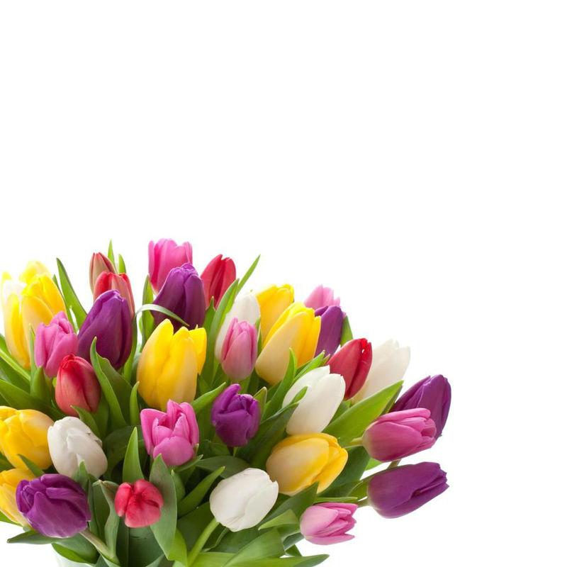 Beispiel: Die Kraft der Blumen, Foto: Blumenhaus Mäglin.
