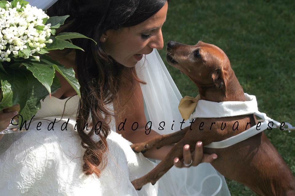 Wedding dogsittervarese