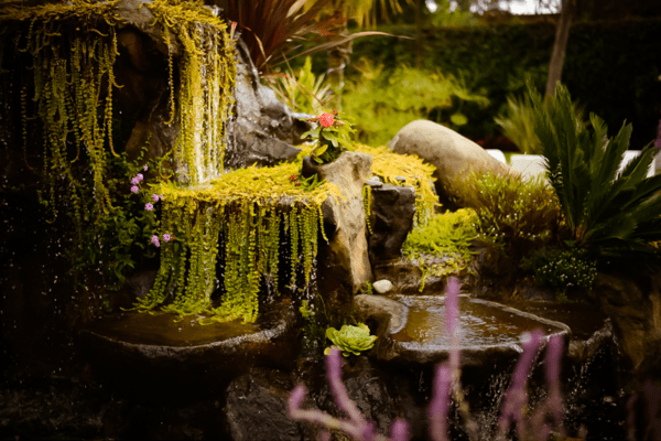 Jardines para bodas en morelos for Jardin quinta real