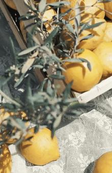 Detalle de una mesa de limonada Wedding Warriors
