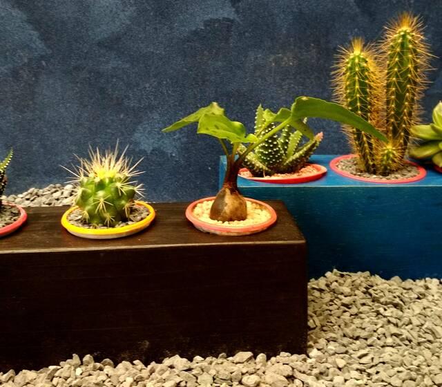 Trio Sortilegio; sábila buena vibra, cactus absorbiendo las malas y la otra suculenta, portadora de prosperidad.
