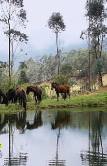 Parque Ecológico Jericó