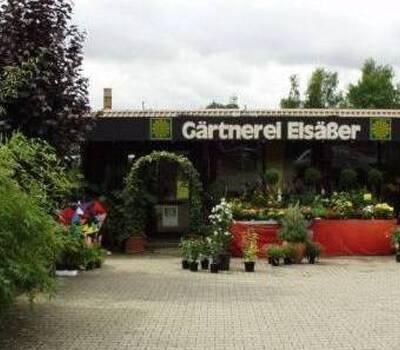 Beispiel: Vorderansicht, Foto: Gärtnerei Elsäßer.
