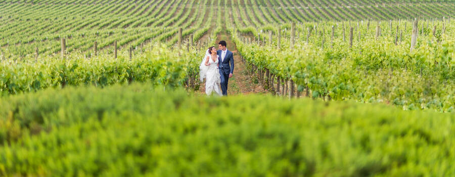 Destination Wedding at Casas del Bosque Vineyard, Chile