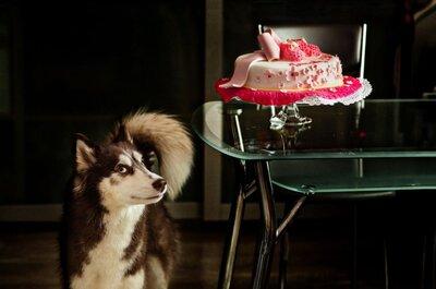 Собака на свадьбе: главное событие в сопровождении верного друга