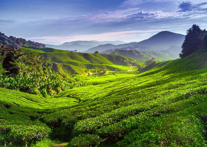 Descubra um novo paraíso com uma lua-de-mel na Malásia!