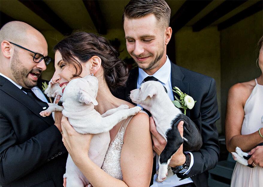 E quando o bouquet é substituído por cachorrinhos? O resultado é lindo!