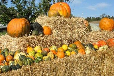 Heiraten im Herbst: 6 Ideen dazu!