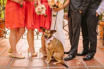 Tus mascotas en tu matrimonio. Ideas para que participen del gran día