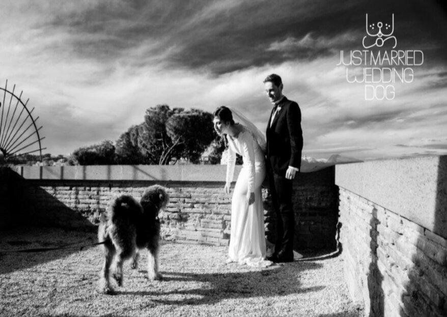 Just Married Wedding Dog: il tuo amico a quattro zampe con te nel tuo grande giorno