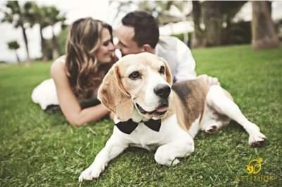 Divertidas fotografías de boda y pre-boda con perros