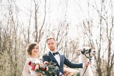 Стилизованная свадьба: съемка с ламой