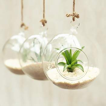Terrario de cristal para colgar. Credits: Amazon
