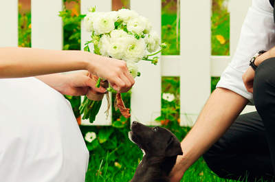Mira cómo este tierno perro participó en una pedida de mano