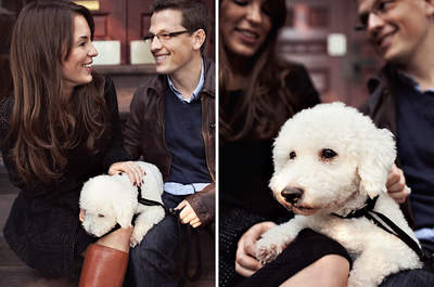 A Surprise Puppy is also a Surprise Proposal