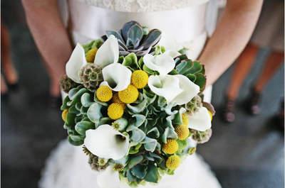 Kraspedia w bukiecie i dekoracjach ślubnych