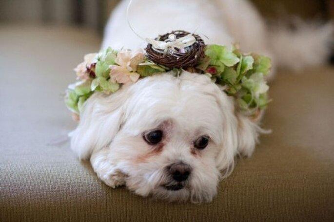 Los perros como pajesitos de boda. Foto de Jhon & Joseph Photography Inc en Style Me Pretty