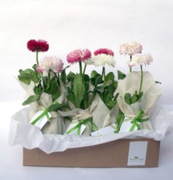 Flores con conciencia ecológica para bodas, de Greengift