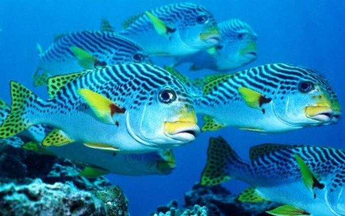 los peces ofrecen colores para decorar