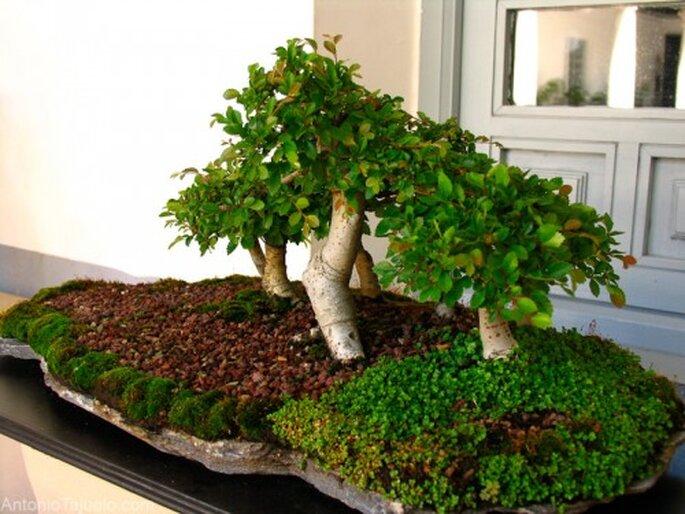 Centro de mesa de boda con árbolitos bonsai. Foto Antonio Tajuelo