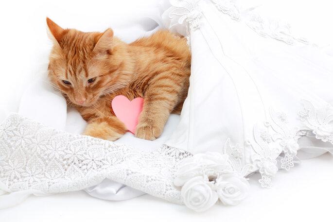 Wer kann schon in den Kopf einer Katze gucken? Foto: Shutterstock