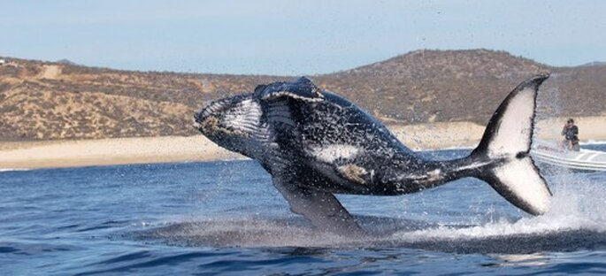 Los Cabos. Foto de VisitMéxico.com