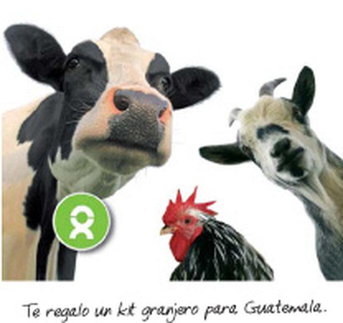 Regalos solidarios con Intermón Oxfam
