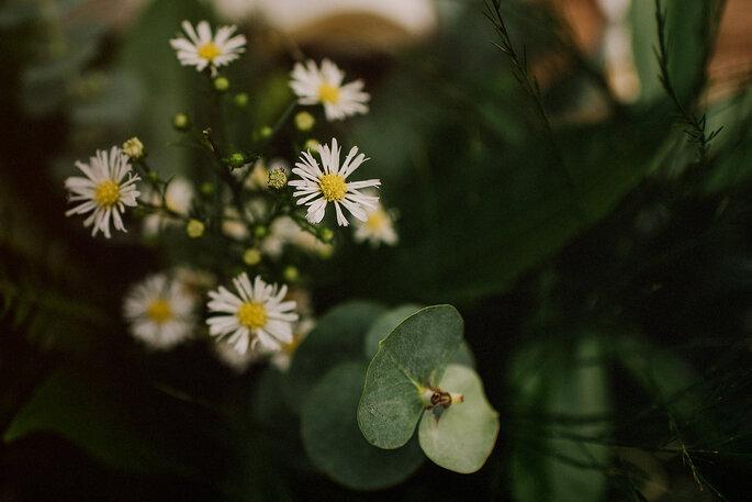 Las flores más cotizadas por las novias colombianas: ¿Cuál es tu favorita?