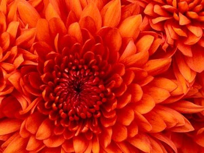 Corso di Floral design 24.10.2010