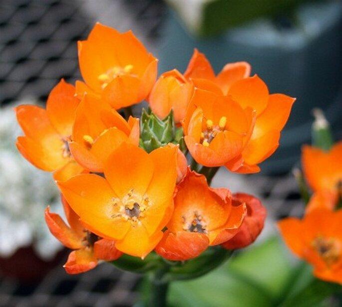 Hermosas flores silvestres para decorar en color mandarina.  Foto: Flower Factor