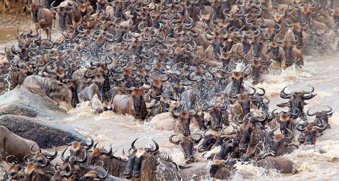 Masiko Safaris