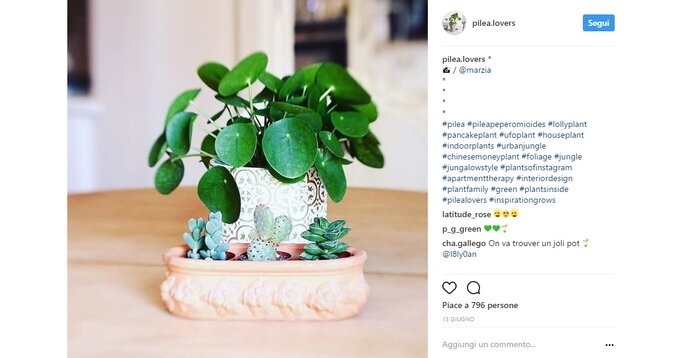 Foto via Instagram@pilea.lovers