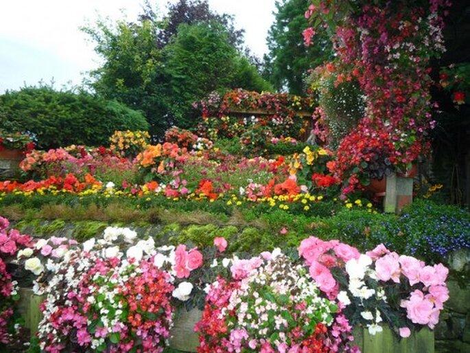 Flores del jardín para hacer un ramo de novia - Foto tejvanphotos