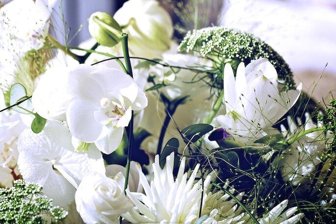 Tulipani Bianchi - Flower Design
