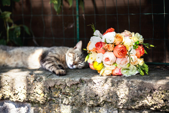 Frau heiratet Katze