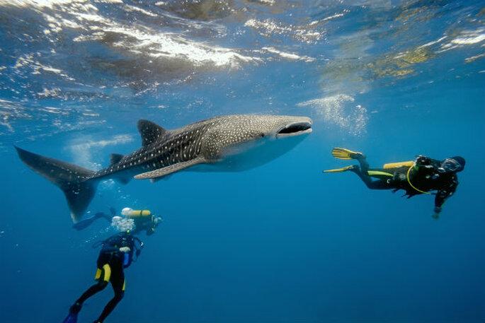 Mozambique Bazarutho Diving - SA Bucketlist