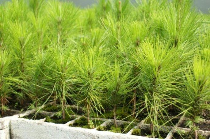 Arbustos en pequeñas macetas - Foto: Vivero Forestal Encanto