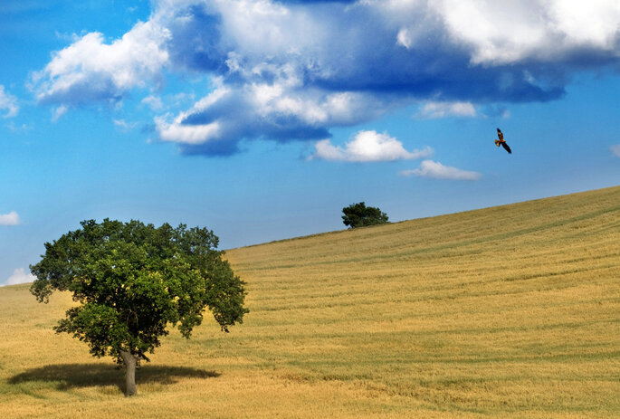 Le Masserie del Falco