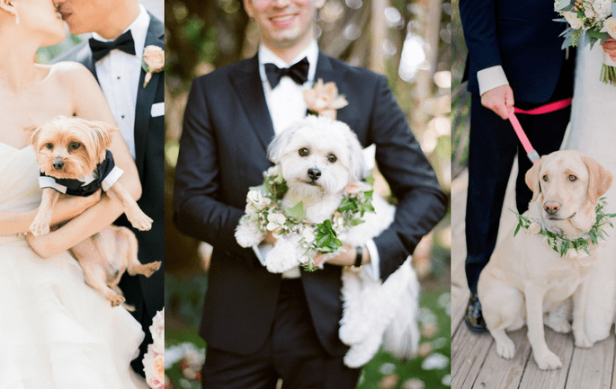 Photo: Pets At Weddings
